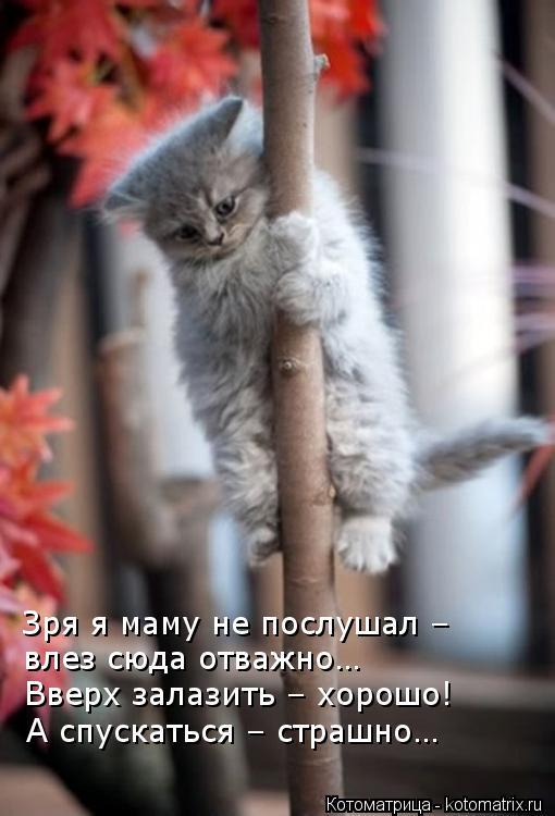 Котоматрица: Зря я маму не послушал – влез сюда отважно… Вверх залазить – хорошо! А спускаться – страшно…