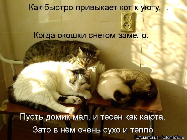 Как сделать чтобы кошка привыкла к дому