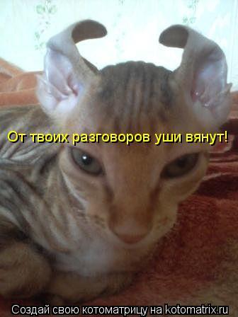 Котоматрица: От твоих разговоров уши вянут!