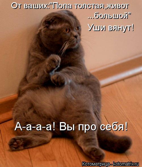 """Котоматрица: От ваших:""""Попа толстая,живот ...большой"""" Уши вянут! А-а-а-а! Вы про себя!"""