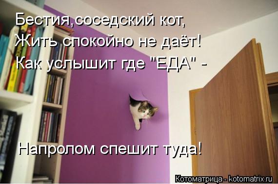 """Котоматрица: Бестия,соседский кот, Жить спокойно не даёт! Как услышит где """"ЕДА"""" - Напролом спешит туда!"""