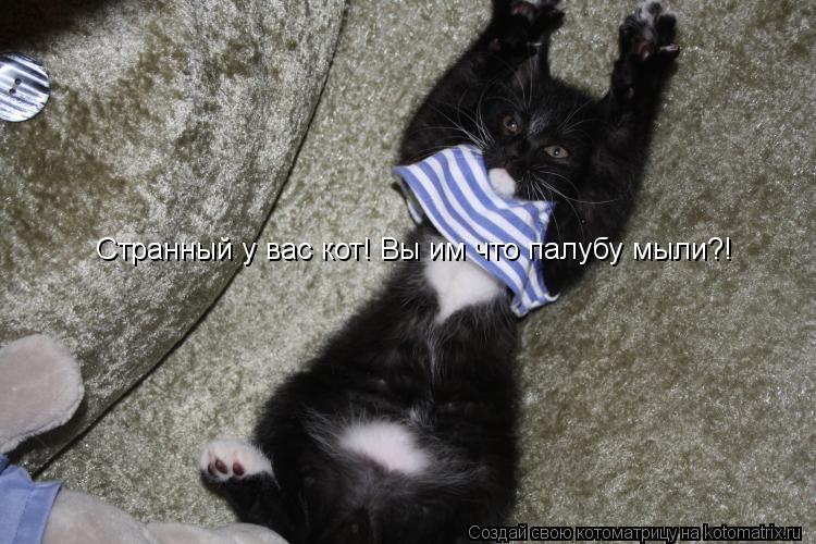 Котоматрица: Странный у вас кот! Вы им что палубу мыли?!