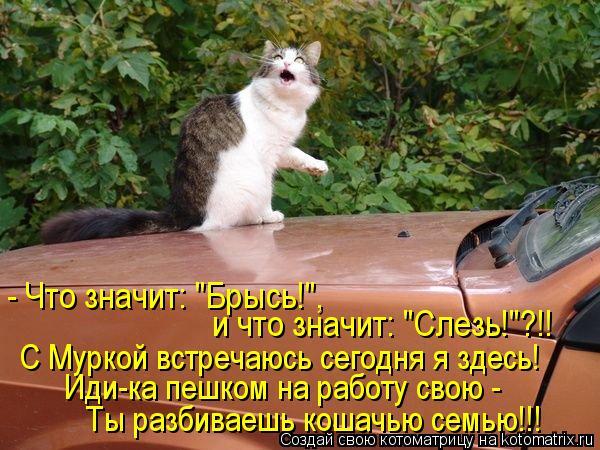 """Котоматрица: - Что значит: """"Брысь!"""",  и что значит: """"Слезь!""""?!! С Муркой встречаюсь сегодня я здесь! Иди-ка пешком на работу свою -  Ты разбиваешь кошачью семью!!"""