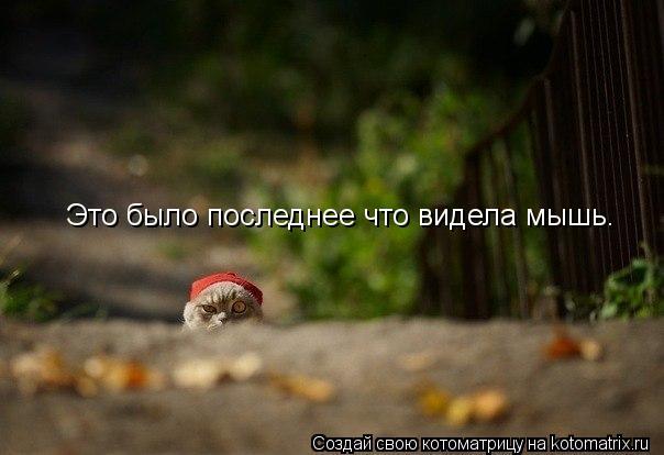 Котоматрица: Это было последнее что видела мышь.