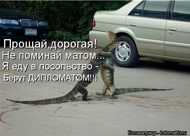 Котоматрица: Прощай,дорогая! Не поминай матом... Я еду в посольство - Берут ДИПЛОМАТОМ!!!