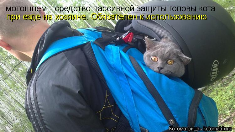 Котоматрица: мотошлем - средство пассивной защиты головы кота при езде на хозяине. Обязателен к использованию при езде на хозяине. Обязателен к использо