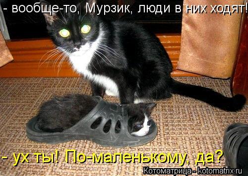 Котоматрица: - вообще-то, Мурзик, люди в них ходят! - ух ты! По-маленькому, да?