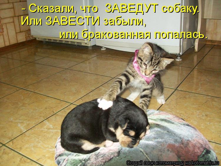 Котоматрица: - Сказали, что  ЗАВЕДУТ собаку. Или ЗАВЕСТИ забыли, или бракованная попалась.