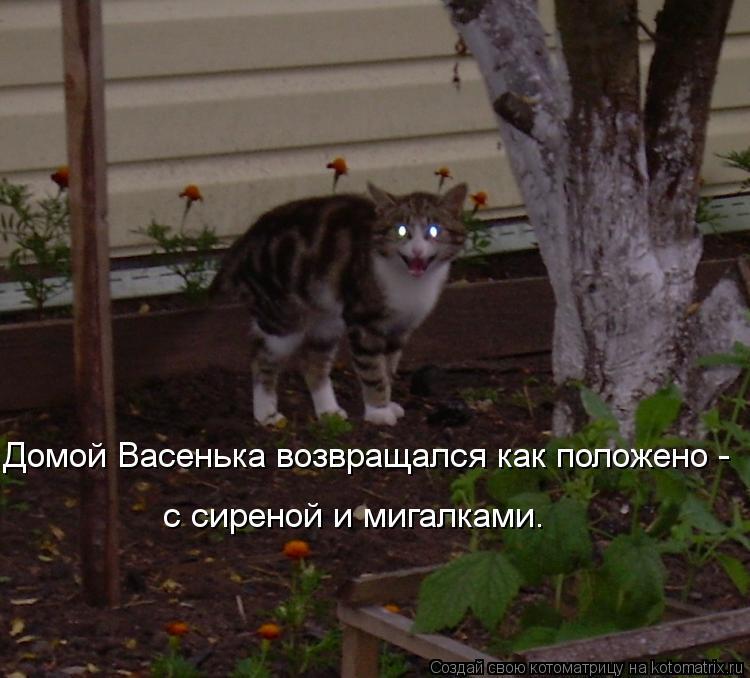 Котоматрица: Домой Васенька возвращался как положено -  с сиреной и мигалками.
