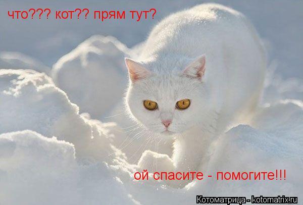 Котоматрица: что??? кот?? прям тут? ой спасите - помогите!!!