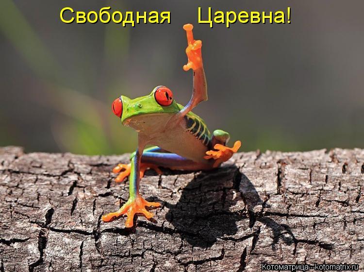 Котоматрица: Свободная    Царевна!