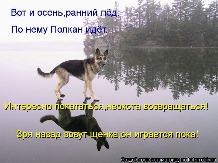 Котоматрица: Вот и осень,ранний лёд. По нему Полкан идёт. Интересно покататься,неохота возвращаться! Зря назад зовут щенка,он играется пока!
