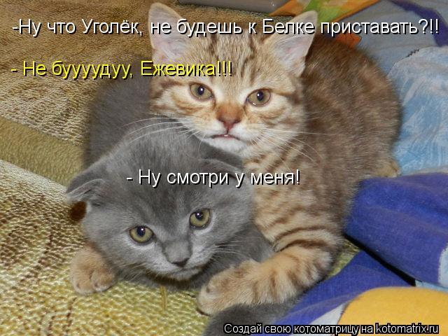 Котоматрица: -Ну что Уголёк, не будешь к Белке приставать?!! - Не буууудуу, Ежевика!!! - Ну смотри у меня!