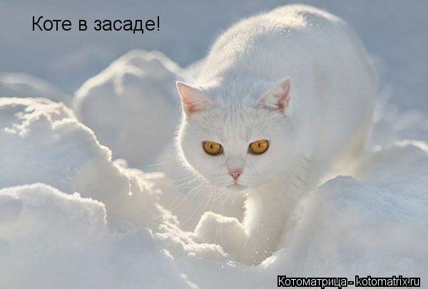 Котоматрица: Коте в засаде!