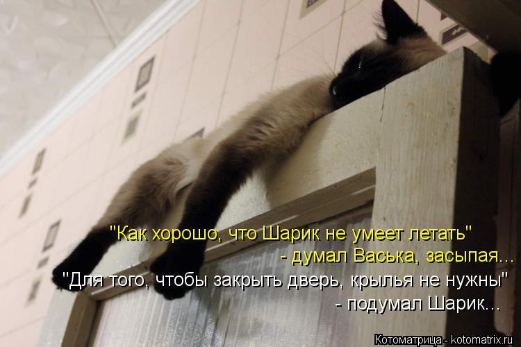"""Котоматрица: - думал Васька, засыпая... """"Как хорошо, что Шарик не умеет летать""""  """"Для того, чтобы закрыть дверь, крылья не нужны""""  - подумал Шарик..."""