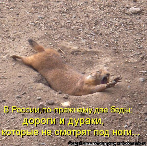 Котоматрица: В России,по-прежнему,две беды: дороги и дураки, которые не смотрят под ноги...