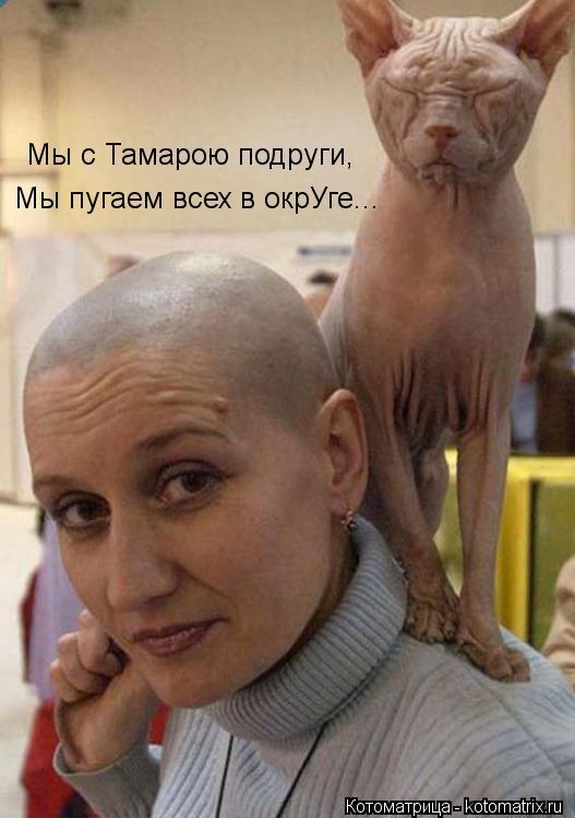 Котоматрица: Мы с Тамарою подруги, Мы пугаем всех в окрУге...