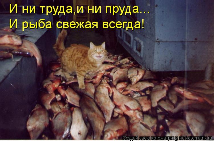Котоматрица: И ни труда,и ни пруда... И рыба свежая всегда!
