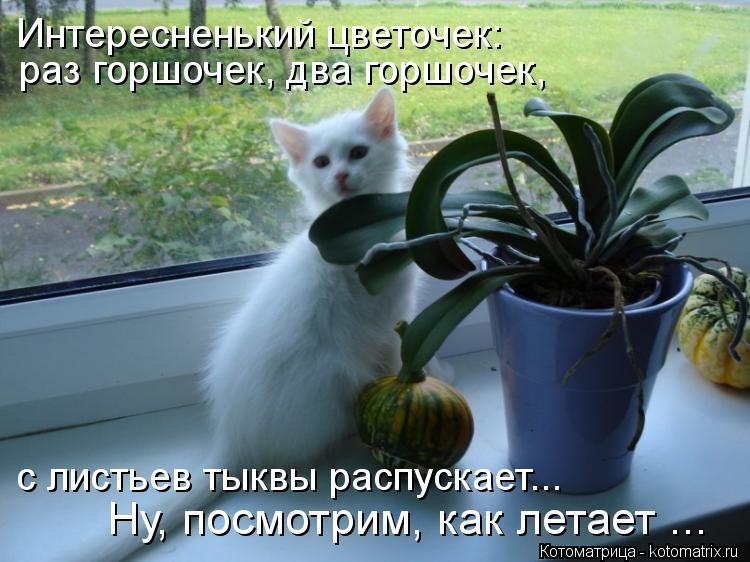 Котоматрица: раз горшочек, два горшочек, с листьев тыквы распускает... Ну, посмотрим, как летает ... Интересненький цветочек: