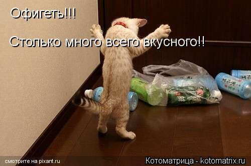 Котоматрица: Афигеть  Офигеть!!!  Столько много всего вкусного!!