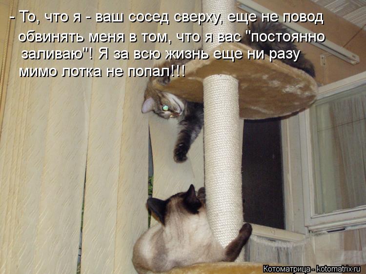"""Котоматрица: - То, что я - ваш сосед сверху, еще не повод обвинять меня в том, что я вас """"постоянно заливаю""""! Я за всю жизнь еще ни разу мимо лотка не попал!!!"""