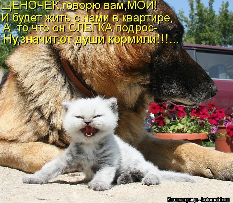 Котоматрица: ЩЕНОЧЕК,говорю вам,МОЙ! И будет жить с нами в квартире, А  то,что он СЛЕГКА подрос- Ну,значит,от души кормили!!!...