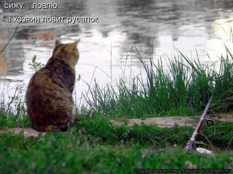 кот ловит человека
