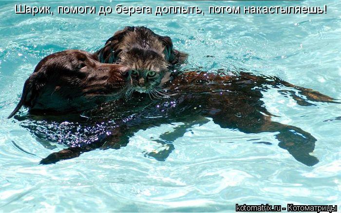 Котоматрица: Шарик, помоги до берега доплыть, потом накастыляешь!