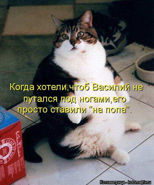 """Котоматрица: Когда хотели,чтоб Василий не  путался под ногами,его  просто ставили """"на попа""""."""