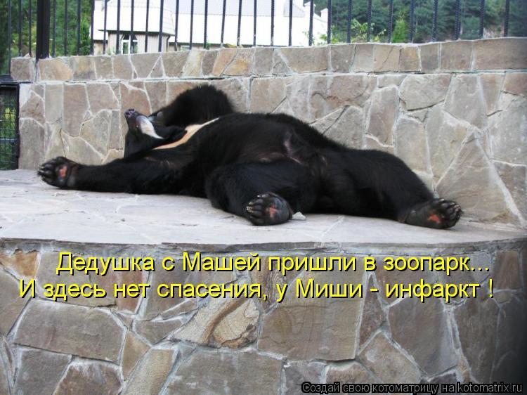 Котоматрица: Дедушка с Машей пришли в зоопарк... И здесь нет спасения, у Миши - инфаркт !