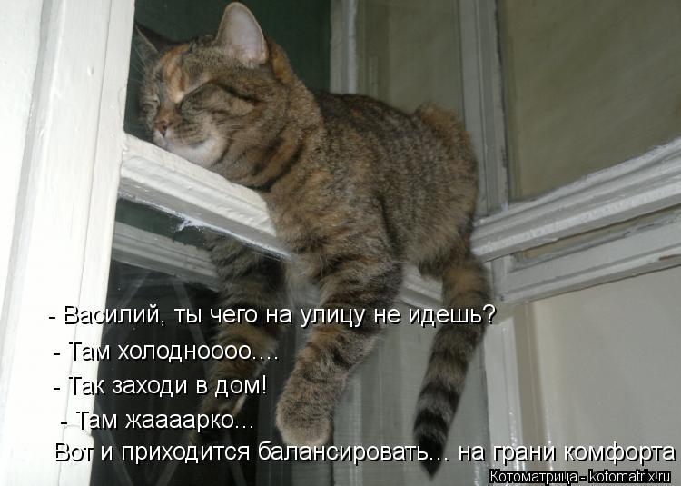 Котоматрица: - Василий, ты чего на улицу не идешь? - Там холодноооо.... - Так заходи в дом! - Там жаааарко... Вот и приходится балансировать... на грани комфорта