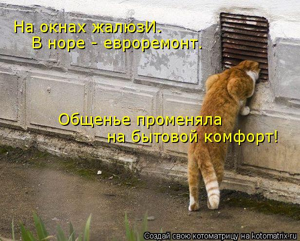 Котоматрица: На окнах жалюзИ. В норе - евроремонт. Общенье променяла на бытовой комфорт!