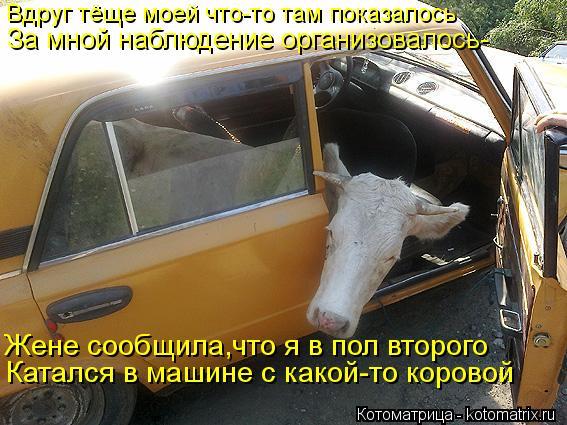 Котоматрица: Вдруг тёще моей что-то там показалось За мной наблюдение организовалось- Жене сообщила,что я в пол второго Катался в машине с какой-то коров
