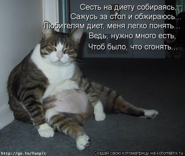 Котоматрица: Сесть на диету собираясь, Сажусь за стол и обжираюсь... Любителям диет, меня легко понять... Ведь, нужно много есть,  Чтоб было, что сгонять...
