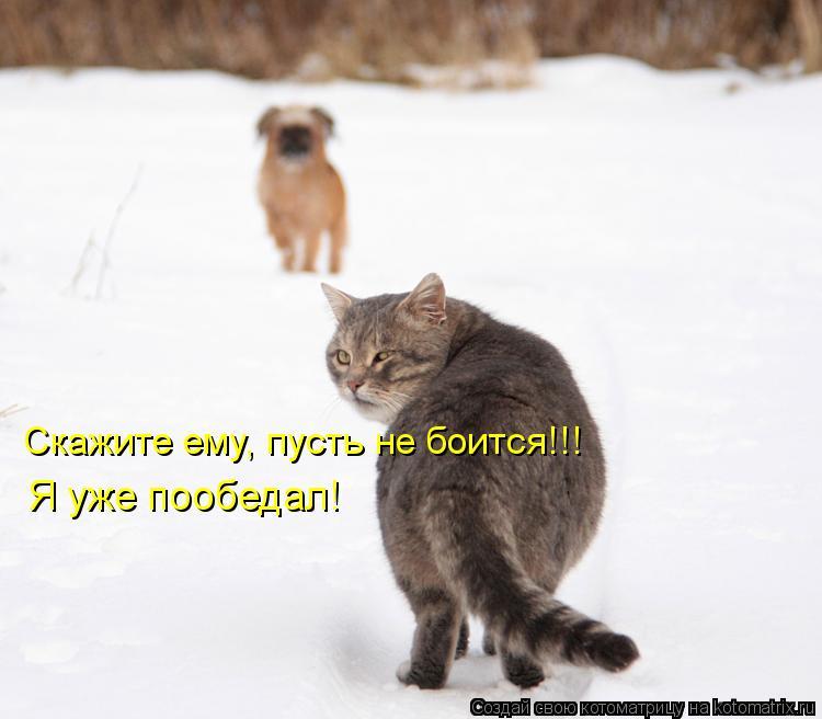 Котоматрица: Скажите ему, пусть не боится!!! Я уже пообедал!
