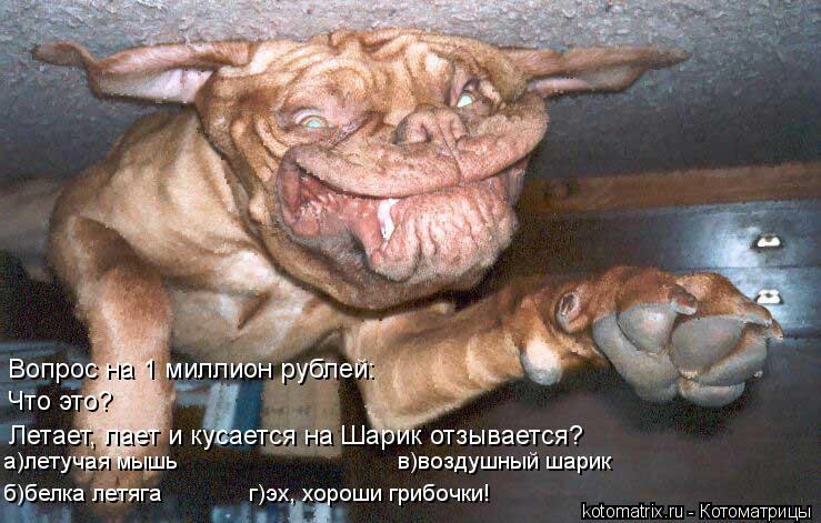 Котоматрица: Вопрос на 1 миллион рублей: Летает, лает и кусается на Шарик отзывается? Что это? а)летучая мышь                                 в)воздушный шарик б)белка ле