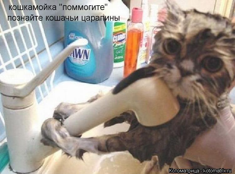 """Котоматрица: кошкамойка """"поммогите"""" познайте кошачьи царапины"""