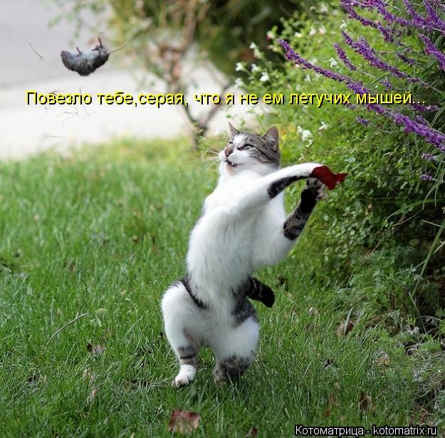 Котоматрица: Повезло тебе,серая, что я не ем летучих мышей...