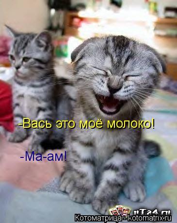 Котоматрица: -Вась это моё молоко! -Ма-ам!