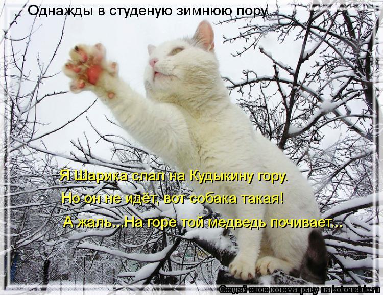 Котоматрица: Однажды в студеную зимнюю пору... Я Шарика слал на Кудыкину гору. Но он не идёт, вот собака такая! А жаль...На горе той медведь почивает... А жаль