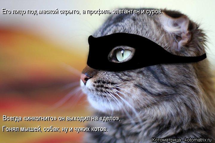 Котоматрица: Его лицо под маской скрыто, а профиль элегантен и суров. Всегда «инкогнито» он выходил на «дело», Гонял мышей, собак, ну и чужих котов.