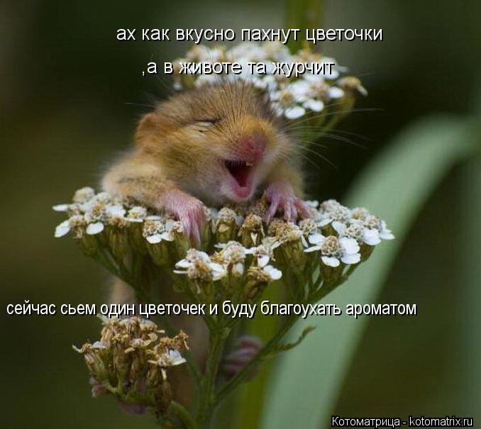 Котоматрица: ах как вкусно пахнут цветочки  ,а в животе та журчит сейчас сьем один цветочек и буду благоухать ароматом