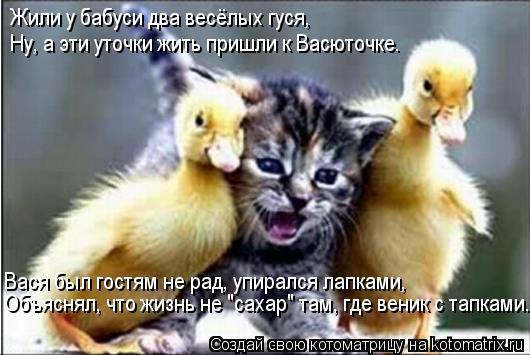 """Котоматрица: Жили у бабуси два весёлых гуся, Ну, а эти уточки жить пришли к Васюточке. Вася был гостям не рад, упирался лапками, Объяснял, что жизнь не """"сах"""