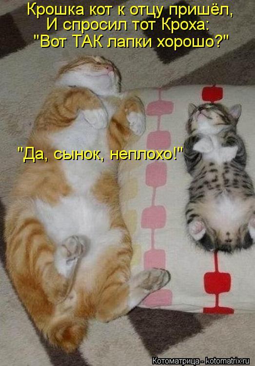 """Котоматрица: Крошка кот к отцу пришёл, И спросил тот Кроха: """"Вот ТАК лапки хорошо?"""" """"Да, сынок, неплохо!"""""""