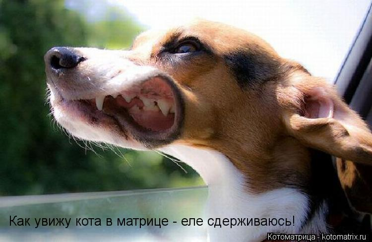 Котоматрица: Как увижу кота в матрице - еле сдерживаюсь!