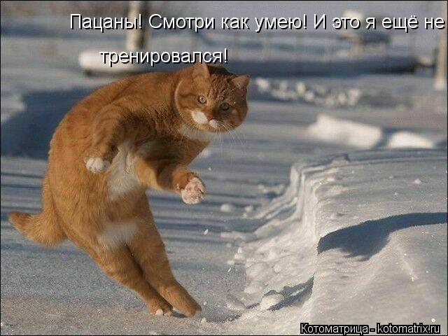 Котоматрица: Пацаны! Смотри как умею! И это я ещё не тренировался!  тренировался!