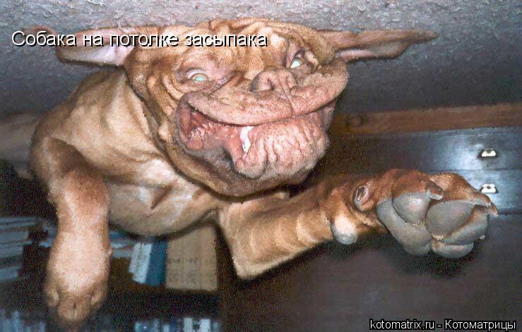 Котоматрица: Собака на потолке засыпака