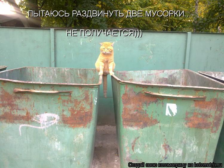 Котоматрица: ПЫТАЮСЬ РАЗДВИНУТЬ ДВЕ МУСОРКИ... НЕ ПОЛУЧАЕТСЯ)))