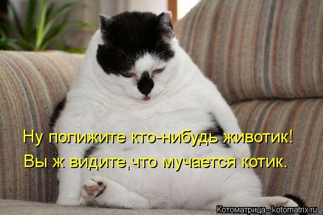 Котоматрица: Ну полижите кто-нибудь животик! Вы ж видите,что мучается котик.