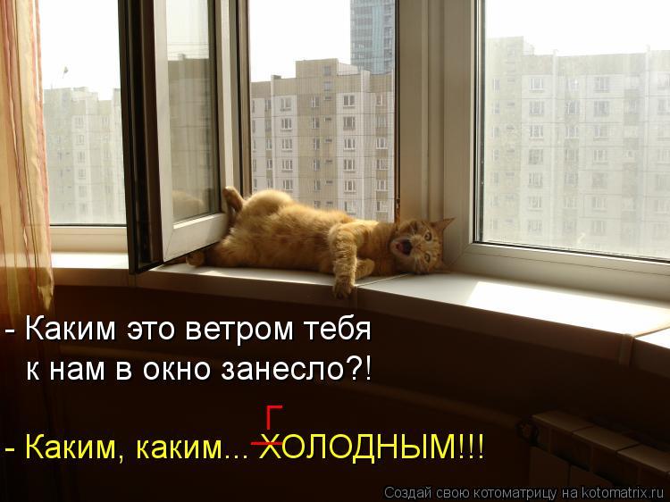 Котоматрица: - Каким это ветром тебя к нам в окно занесло?! - Каким, каким... ХОЛОДНЫМ!!! | Г